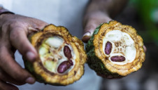 The overall Cocoa Life sourcing programme aims to eventually reach more than 200,000 farmers across six countries and benefit more than a million people by 2022